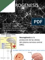 neurogenesis-131106075711-phpapp01