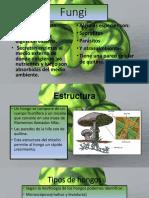 Fungi y Virus Bilogia
