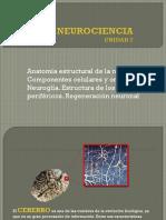 Anatomia Estructural de La Neurona