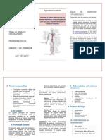 Sistema Circulatorio (triptico)