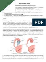 Anatomeda Del Aparato Reproductor Femenino 20101