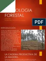 Tecnologia Forestal