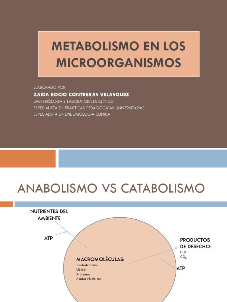 Aquí es whay usted debe hacer sobre dieta para acelerar el metabolismo y bajar de peso