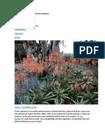 Propiedades Medicinales Del Aloe Saponaria