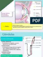 Conjuntivitis-1