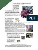 reef_aquarium_pests_and_parasites__red_bugs_and_nudibranchs