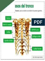 Huesos del tronco FINAL.docx