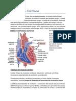 El Músculo Cardiáco