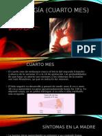 Embriología (Cuarto Mes)