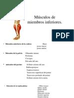 Msculosmiembroinferior 151125213929 Lva1 App6892