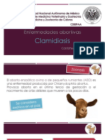 Clamidia Sis