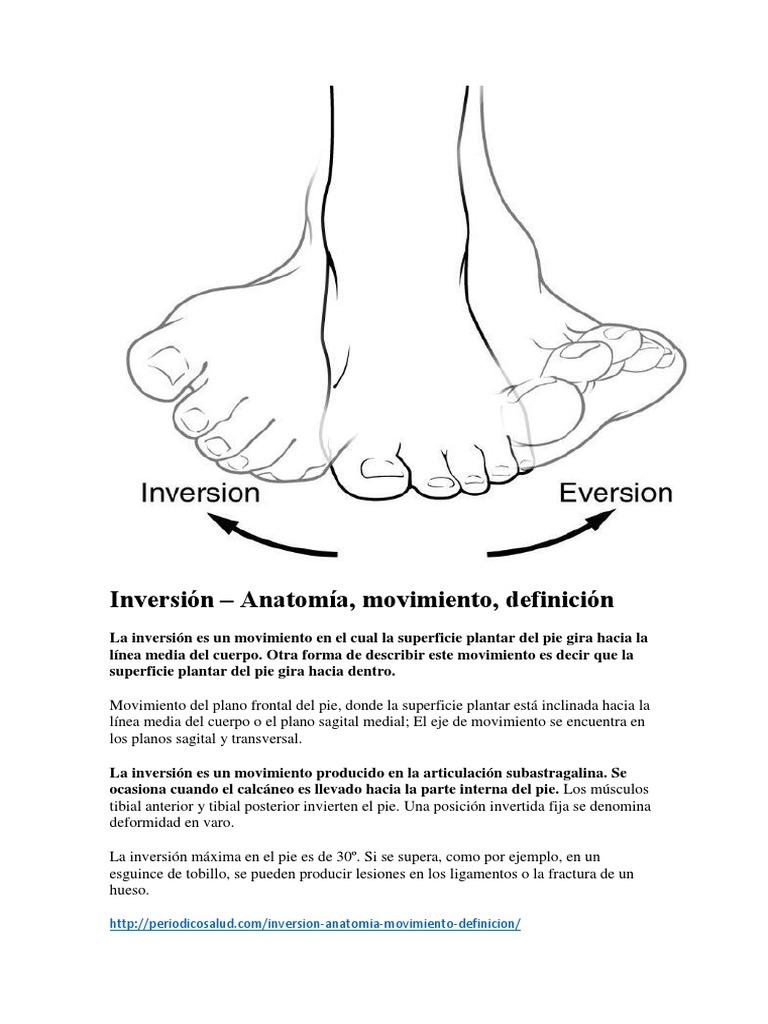 Lujo Anatomía De Los Ligamentos Del Pie Y Tobillo Inspiración ...