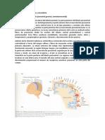 Corteza Sensitiva Primaria y Secundaria