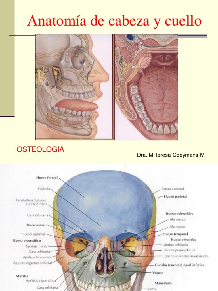 OSTEOLOGIA1