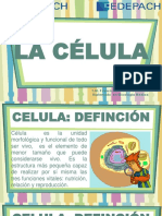 1.- Celula
