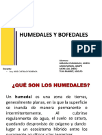 Bofedales y Humedales