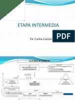 306_etapa_intermedia.pdf