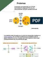 8_Proteinas