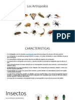 Los Artropodos en presentacion.pptx