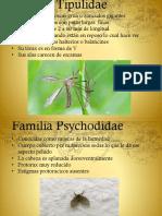 Diptera Taxonomia.pptx