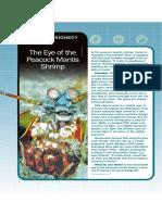 The Eye of the Peacock Mantis Shrimp