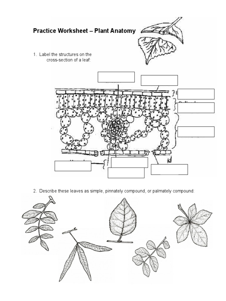 Magnificent Plant Anatomy Worksheet Collection - Anatomy and ...
