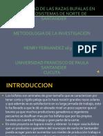 Bufalos Metodologia Ante Proyecto