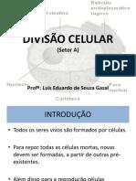 DIVISAO_CELULAR.ppt