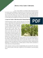 Cashewnut Cultivation (1)