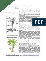 script-tmp-ficha_tecnica_banano.pdf