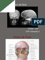 anatomia da face