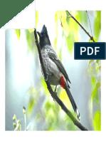 Birds of Uttarkhand