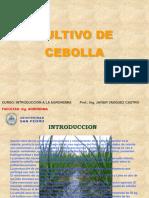 307454921-Cultivo-de-Cebolla.ppt