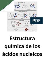Estructura Química de Los Ácidos Nucleicos