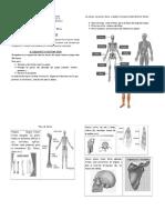 Guía Huesos CUARTO