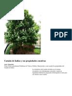 Castaño de Indias y sus propiedades curativas.docx