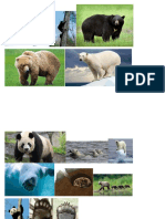 colored bears.docx