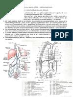 Anastomosis Portacava