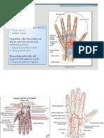 Arteri of Hand 1