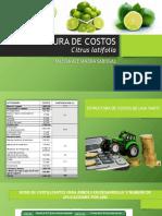 Estructura de Costos de Lima Tahiti