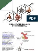 Androgenos Enfocados en Testosterona