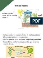 5-Fotosíntesis.pptx