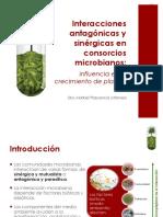 Sinergismo & antagonismo Tema 6.pdf