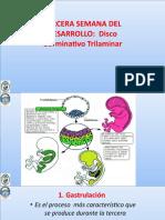 UPLA 2017-1 Embriologia. Clase 3a Semana Desarrollo DISCO TRILAMINAR