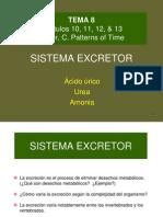 BG 5  Sistema Excretor[1]