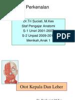 Otot Kepala Dan Leher