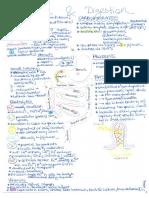 Digestion Physiology.pdf