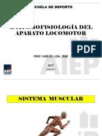Anatomia07 Musculos01 2017 (1)