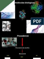 macromoleculas-biologicas