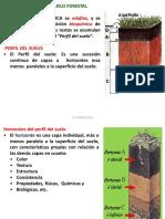 Edafologia 09-2015-Perfil Del Suelo Forestal